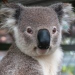 33 Datos Curiosos de Australia y Sydney (Información)