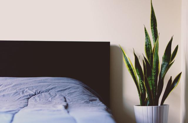 Habitación con muebles y planta en Sydney