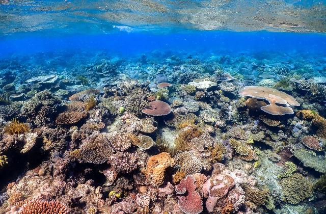 Coral en la Gran Barrera de Coral en Australia